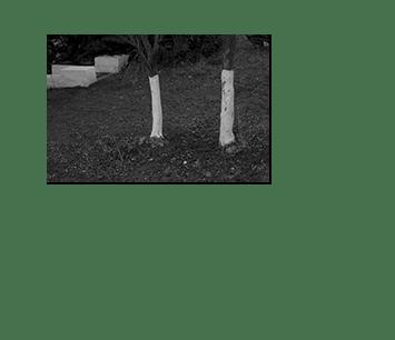apollonia__05
