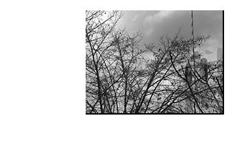 apollonia_nov23_2008_07