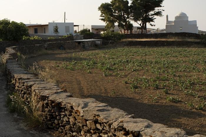 Apollonia, June 13, 2009, 1
